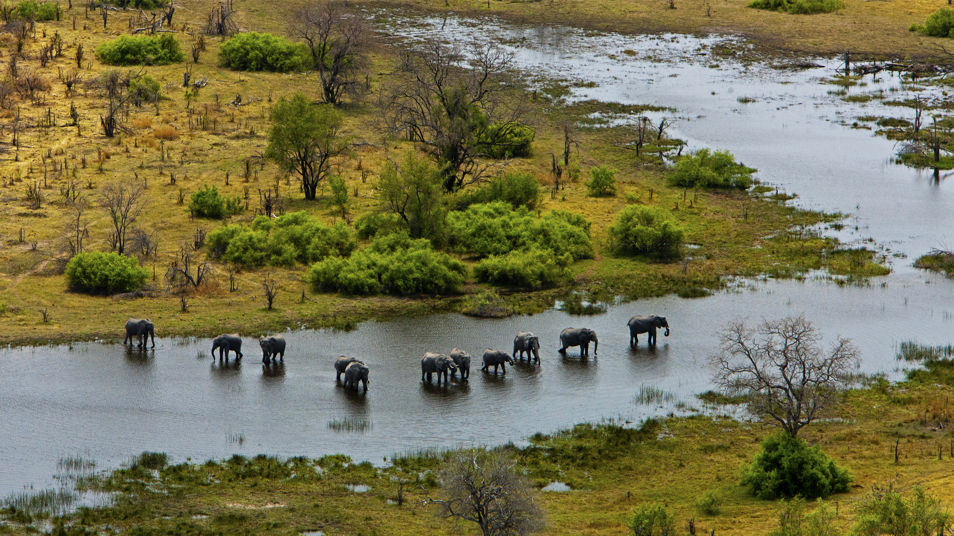 Botswana When to Travel selinda explorers elephant spillway