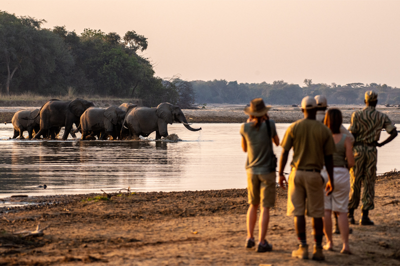 All About Safaris takwela camp walking luangwa river elephants