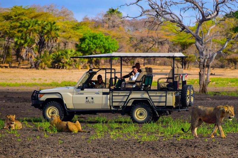 tanzania landing page selous impala camp game drive lions