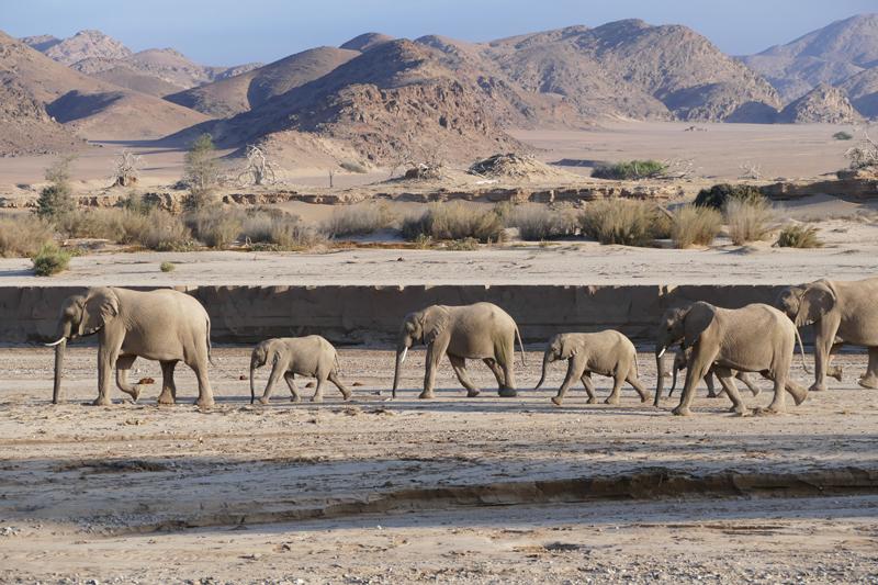 Namibia Regions Landing damaraland elephants