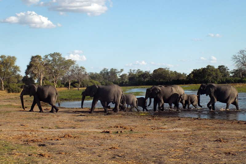 news and blogs filter by country botswana elephant