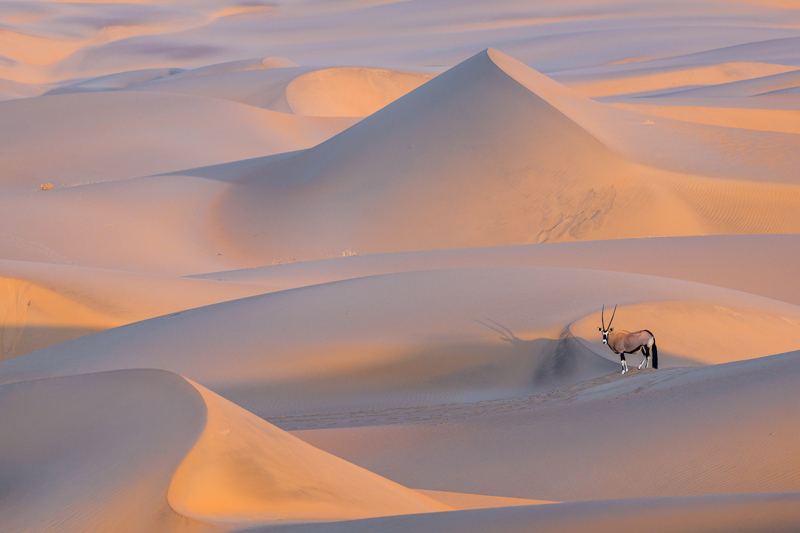 home page inspiration namibian dunes oryx