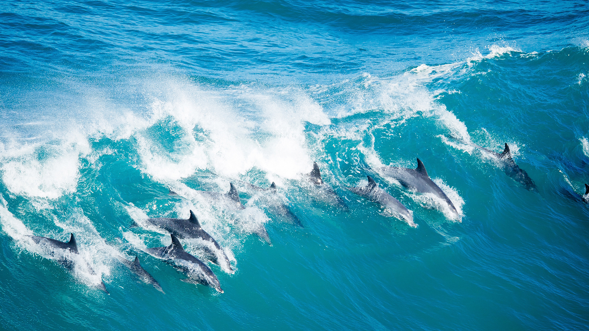 More Specialist Topics dolphins in wave