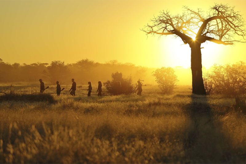 Walking Safaris tanzania kichaka expeditions family bush walk