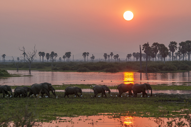 tanzania regions selous asilia river sunset elephants