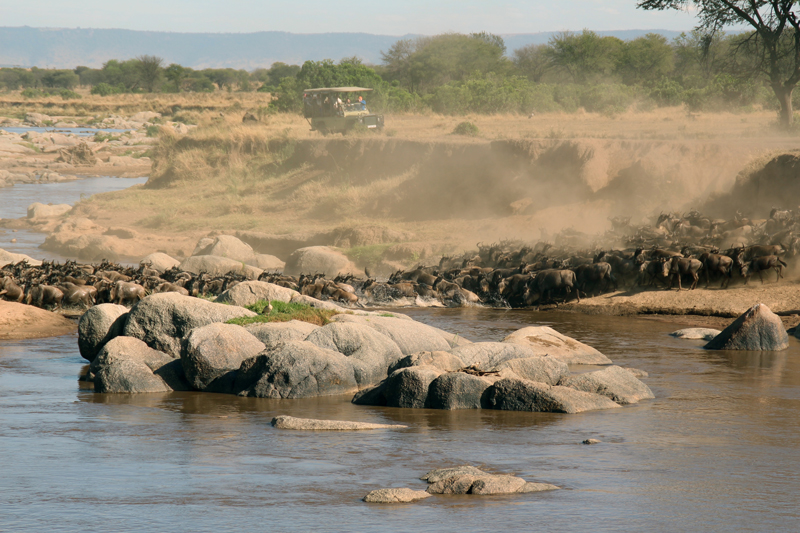 tanzania regions serengeti migration at river