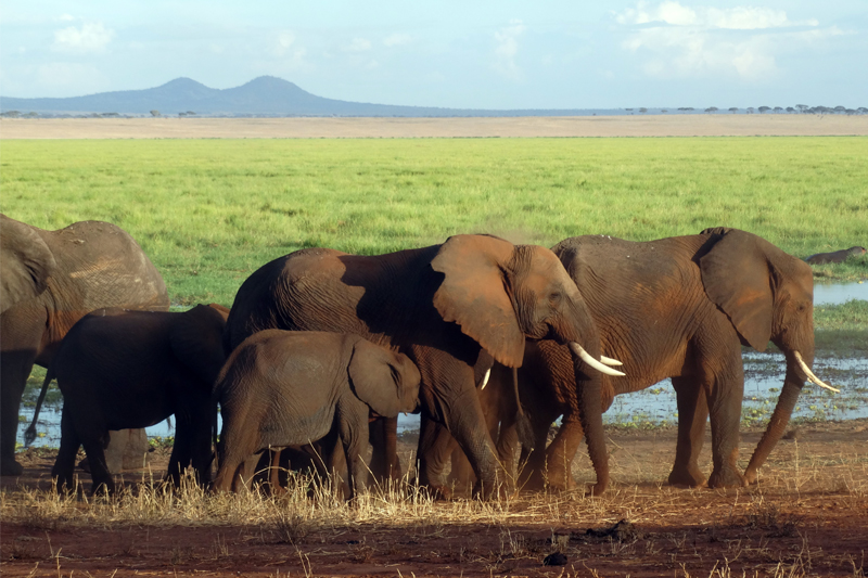 tanzania regions tarangire elephants