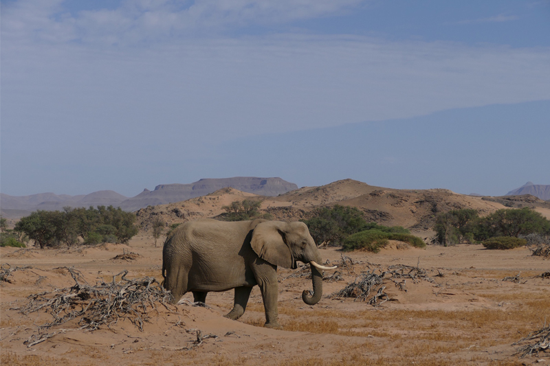 namibia topics seasons and when to travel elephant