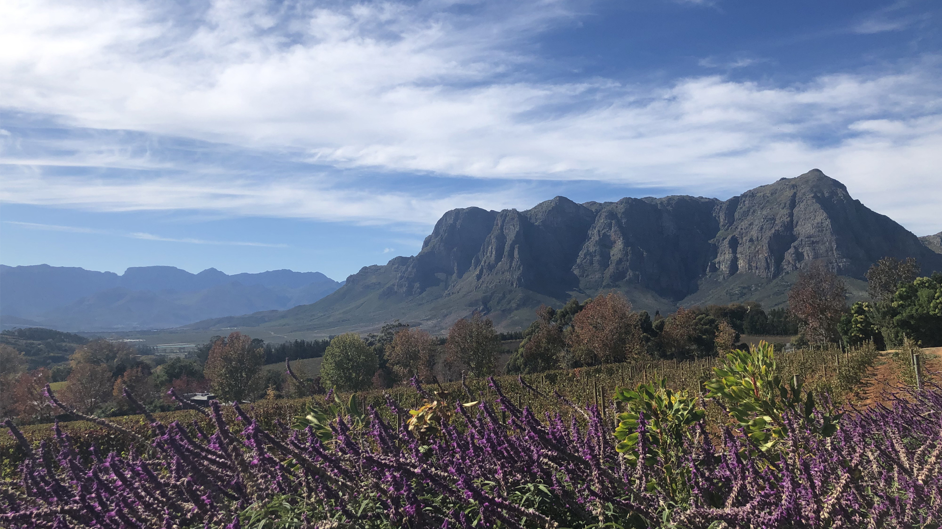 south africa regions landing page winelands header