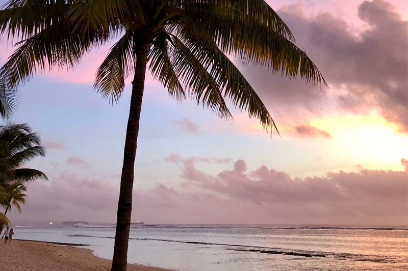 mauritius beach palm tree sunset