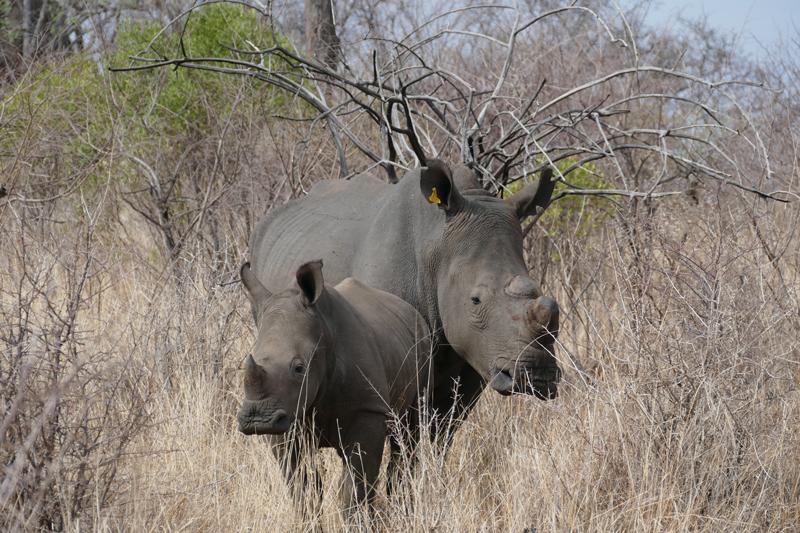 zimbabwe regions matobo hills rhino tracking