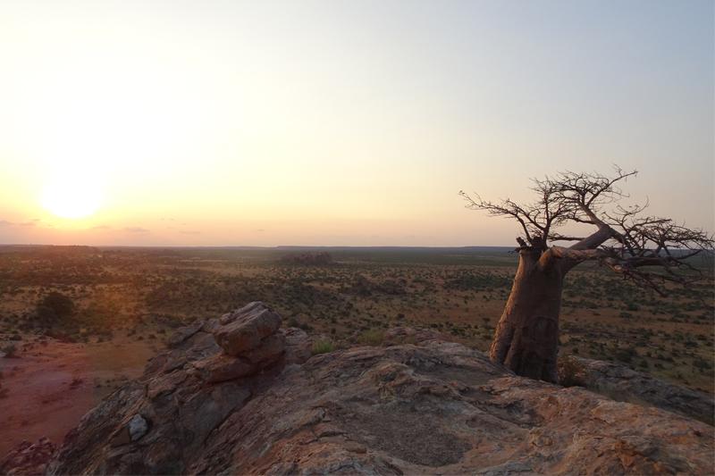 south africa regions landing page north mashatu