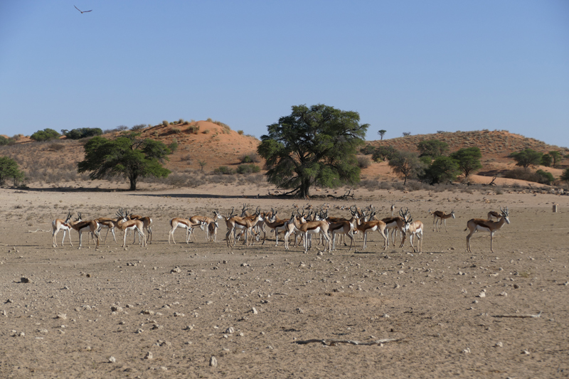 south africa regions landing page west kgalagadi transfrontier park
