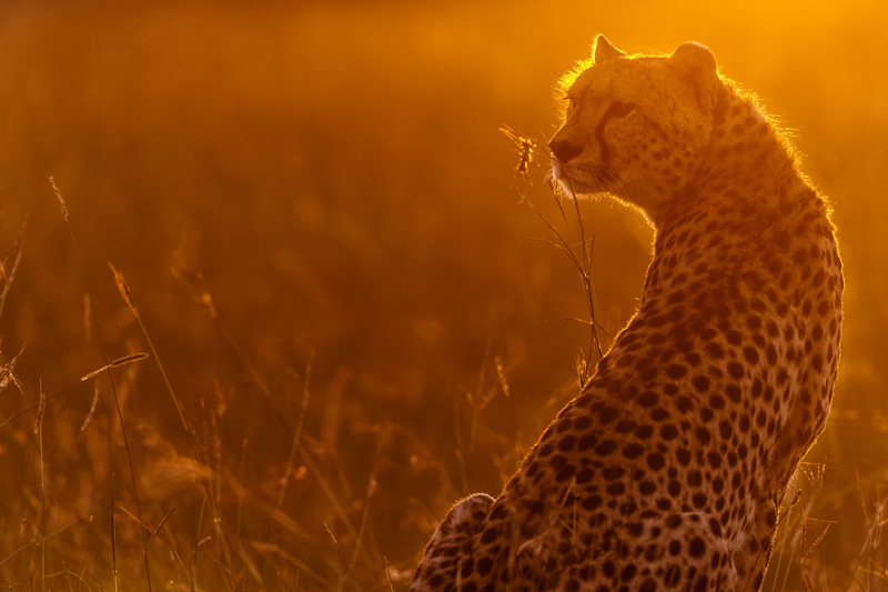 malawi-WILDLIFE-Richard-Costin