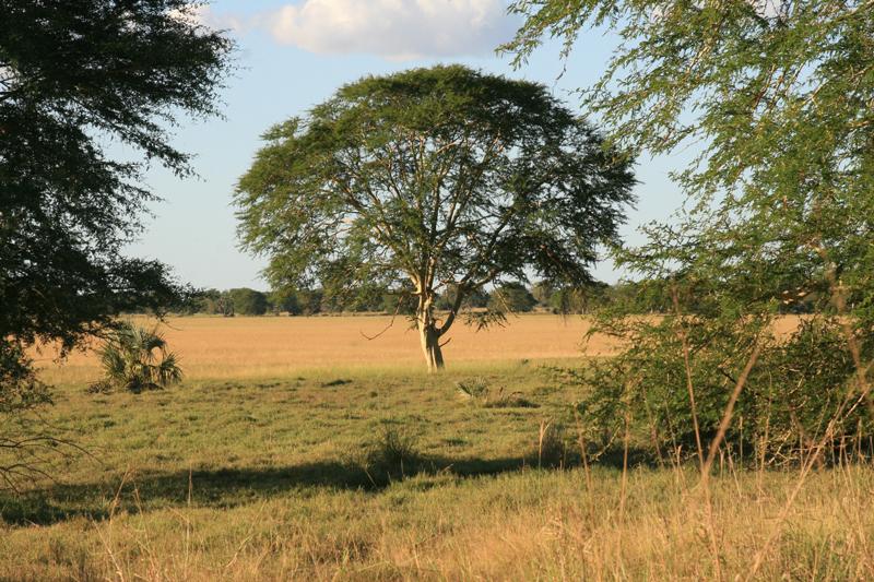 mozambique-region-GORONGOSA-IMG_0432