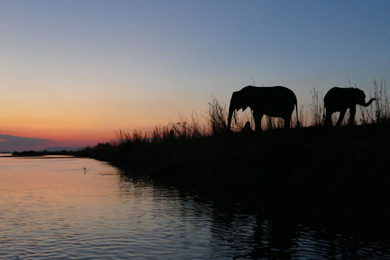 Mana Pools elephant sunset