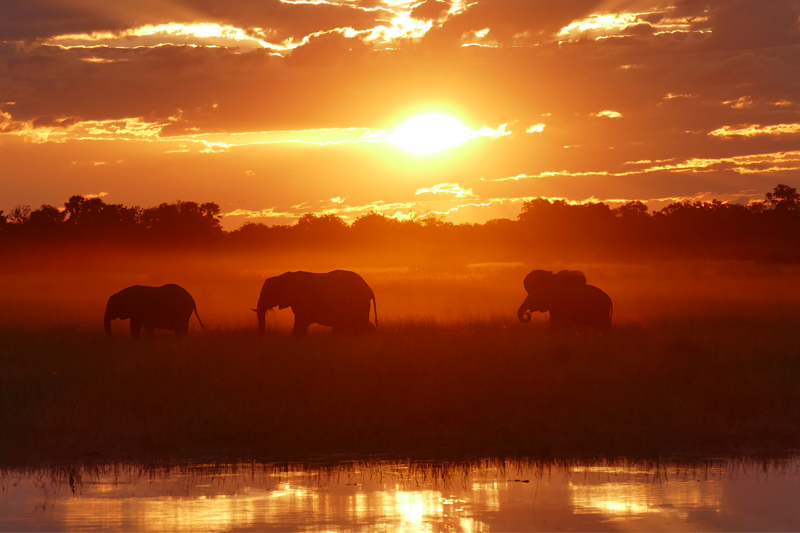 Elephant sunset feature image CP_KW