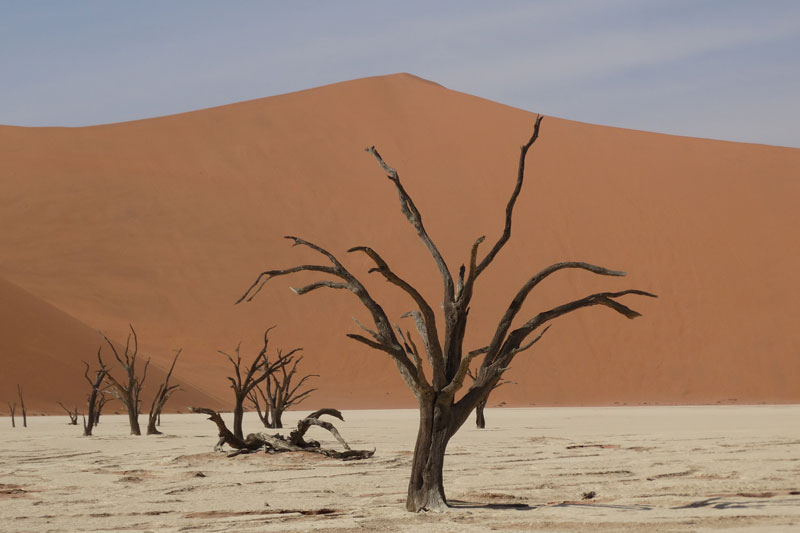 9-dead-vlei-trees